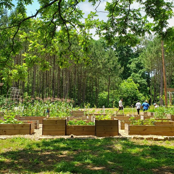 The Urban Food Forest at Browns Mill Community Garden May 2019